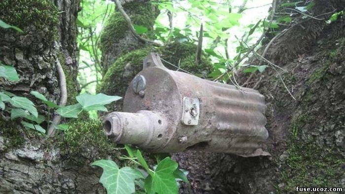 предметы с войны вросшие в деревья